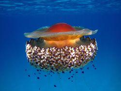 Animales marinos, el calentamiento y la acidificación oceánica