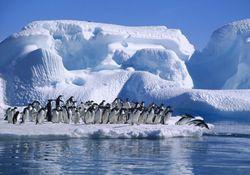 Antártida pierde seis veces más hielo que hace 40 años