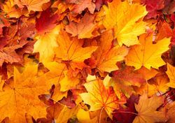 Autumn is favourite season for nearly a quarter of Brits