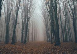 Benditas nieblas: ¿sabes cuáles son las lloronas o 'meonas'?