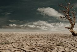 Cambiamenti climatici ed estati del futuro: verso un caldo inaudito?