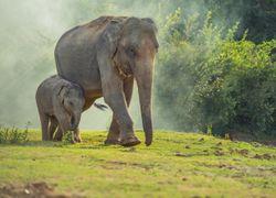 Chine : l'étrange migration d'éléphants échappés d'une réserve