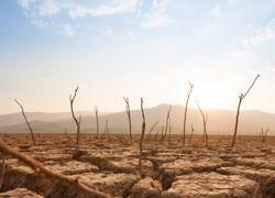 Climat : le nombre de jours à 50°C a doublé depuis 1980 !