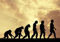 ¿Favoreció el patrón El Niño-Oscilación del Sur a la evolución humana?