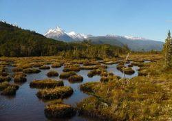 ¿Conoces las turberas?: formidables ecosistemas que están en peligro