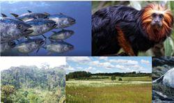 Copernicus firma un nuevo contrato para proteger la biodiversidad
