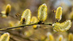 Copernicus, la alergia y la temporada de polen