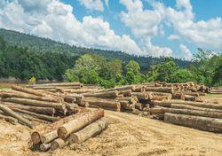 Índice monitorea la vulnerabilidad de bosques tropicales