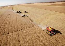 Crolla la produzione di grano duro: colpa del caldo record in Canada