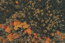 ¿Cuándo llega el otoño?