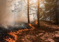 Cuatro regiones del país en alerta preventiva por incendios forestales