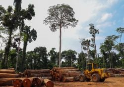 Deforestation at an all-time high in Brazil's Amazon rainforest