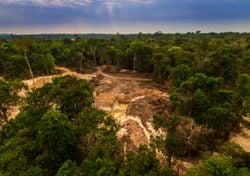 Deforestation, cutting down our future. How much CO2 do forests trap?