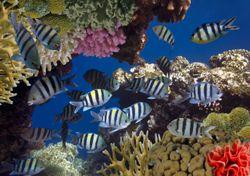 Día Mundial de los Océanos: todo lo que debes saber antes de tuitear