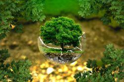 5 de junio 2021: Día Mundial del Medio Ambiente