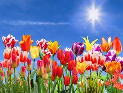 Die Wettervorhersage für den Frühling 2019!