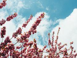 Die Wettervorhersage für die erste Frühlingswoche!