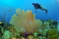 El calentamiento impulsa cambios 'fundamentales' en los océanos
