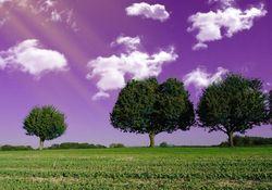 ¡El cielo debería ser violeta!