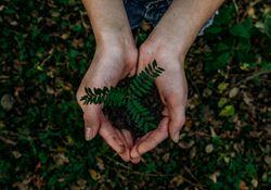 El planeta Tierra más verde que a fines del siglo XX