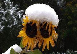 Erster Frost: Droht nun sogar der erste Wintereinbruch?