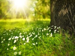 ¡Esto es primavera! ¡Defendámosla!