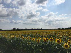 Été maussade : soleil et chaleur vont-ils revenir en août ?