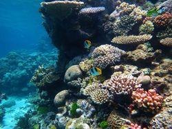 Gran barrera de coral: Se recupera después de dos años de blanqueamiento