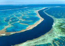 """Grande Barrière de Corail """"en danger"""" : ce que l'Australie n'admet pas"""