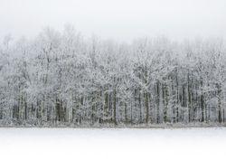 Previsioni meteo, grandi manovre invernali la prossima settimana