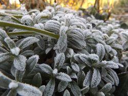 Grippe : le froid augmente t-il le risque de contagion ?