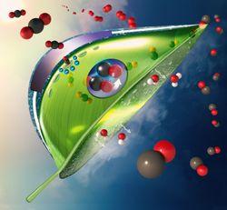 Hojas artificiales y fotosíntesis vienen en nuestra ayuda