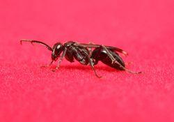 Hormigas voladoras y lluvias, de la mano en otoño