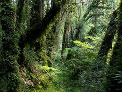 Hoy es el Día Internacional de los Bosques. Toca reflexionar