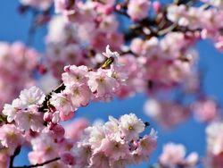 Hoy llega la primavera astronómica, ¿qué cambios nos trae?