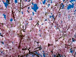 Hurra: Nächste Woche kommt der Frühling mit Sonne und 20 Grad!