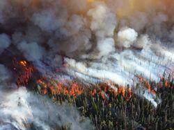 Incendios forestales, un problema que va en aumento