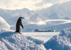 Calentamiento global: una semana llena de récords de temperaturas