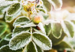 Intensa massa de ar polar deve aumentar os prejuízos na agricultura