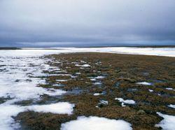 La metamorfosis de Siberia