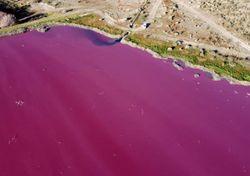 Lagoa com água rosa na Patagônia, até onde vai a poluição humana?