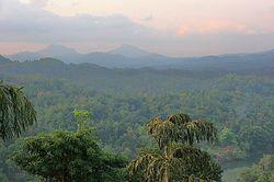 Los bosques tropicales y cambio climático