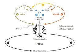 Los trópicos se comunican entre sí