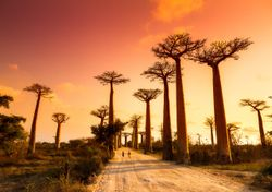 Madagascar facing worst drought in 40 years