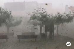 Mega-Hagelsturm entlaubt ganze Bäume binnen Minuten!