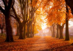 Meteorological Autumn arrives: what can we expect this year?