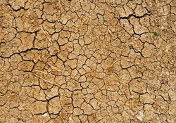 Necesidad de precipitaciones generalizadas