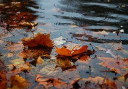 Novembro foi um mês chuvoso
