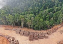 New deforestation record in Brazil's Amazon rainforest