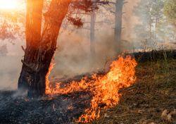 Números recordes de queimadas e uma estação seca ainda longe do fim
